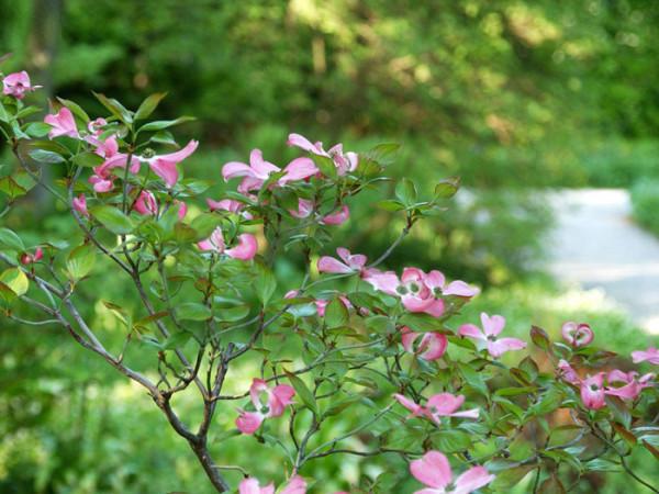 Zweig während der Blütezeit
