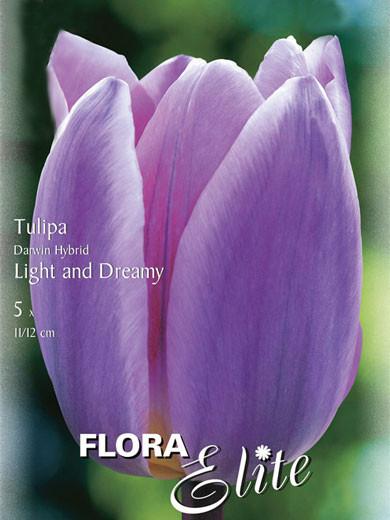 Darwin-Hybrid-Tulpe 'Light an Dreamy' (Art.Nr. 595309)