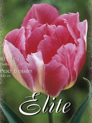 Gefüllte frühe Tulpe 'Peach Blossom' (Art.Nr. 595170)