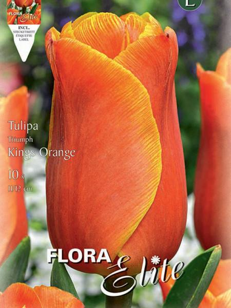 Tulpe Kings Orange