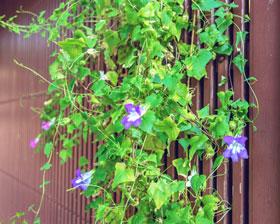 rankgeruest-kletterpflanzen