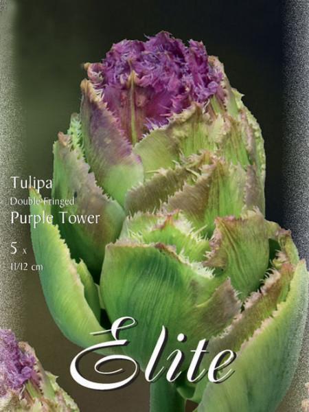 Gefüllte gefranste Tulpe 'Purple Tower' (Art.Nr. 595537)