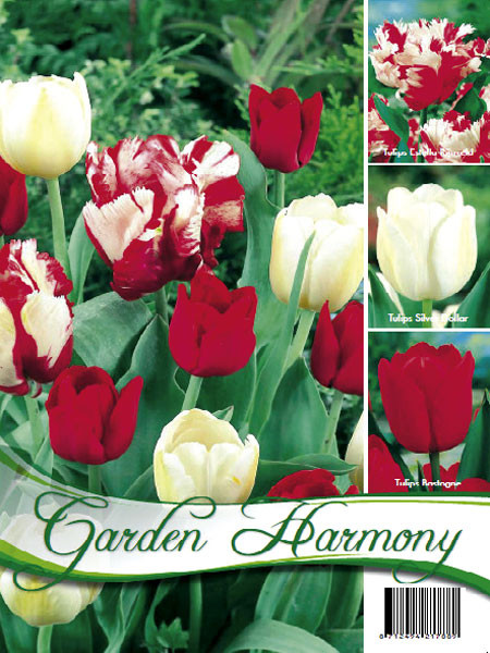 Kollektion rote und weiße Tulpen (Art.Nr. 598210)