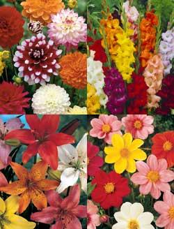 Sommerblühende Blumenzwiebeln