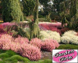 Sommerheide GardenGirls