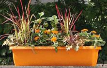 Balkon- und Blumenkästen