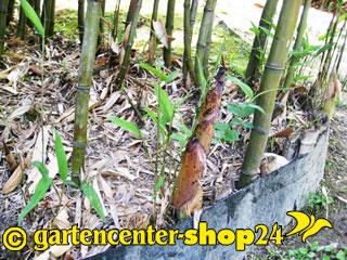 Rhizomsperre für Bambus vom Gartencenter-Shop24