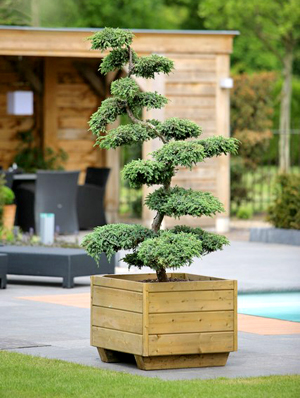 Bonsai Gartencenter-Shop24